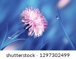 natural spring and summer...   Shutterstock . vector #1297302499