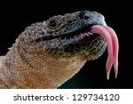 Venomous Beaded Lizard  ...