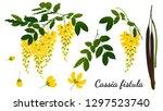 Cassia Fistula  Isolated On...