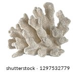 coral isolated on white... | Shutterstock . vector #1297532779