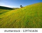Grassland And Remote Tree On...