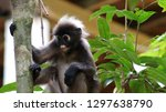 kedah  langkawi  malaysia   apr ...   Shutterstock . vector #1297638790