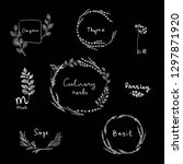 hand drawn set of culinary herb.... | Shutterstock .eps vector #1297871920