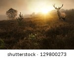 Beautiful Forest Landscape Of...