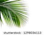 coconut leaf isolated on white... | Shutterstock . vector #1298036113