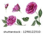set of pink roses. botanical... | Shutterstock . vector #1298122510