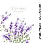 lavender card watercolor vector.... | Shutterstock .eps vector #1298201386