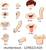 human body parts collection set | Shutterstock . vector #1298221420
