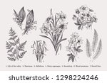 set with early spring flowers.... | Shutterstock .eps vector #1298224246