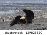 A Bald Eagle Lands On The Beac...