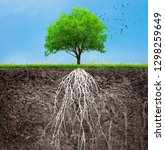tree and soil with roots and... | Shutterstock . vector #1298259649