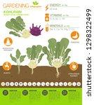 kohlrabi  cabbage turnip ... | Shutterstock .eps vector #1298322499