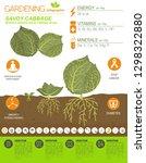 savoy cabbage beneficial... | Shutterstock .eps vector #1298322880