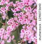 beautiful cherry blossoms... | Shutterstock . vector #1298373640