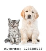 Stock photo golden retriever puppy sitting with tabby kitten isolated on white background 1298385133