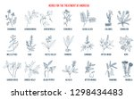 best herbs for the treatment of ... | Shutterstock .eps vector #1298434483