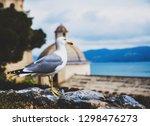 seagull in portovenere  italy ... | Shutterstock . vector #1298476273