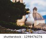 seagull in portovenere  italy ... | Shutterstock . vector #1298476276