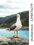 seagull in portovenere  italy ... | Shutterstock . vector #1298476279