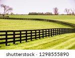 green pastures with black... | Shutterstock . vector #1298555890