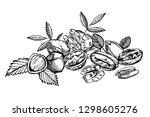 almonds  pecan  cashew nuts ... | Shutterstock .eps vector #1298605276