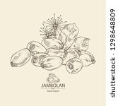 jambolan  jambolan fruit and... | Shutterstock .eps vector #1298648809