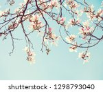 branches of orchid tree ... | Shutterstock . vector #1298793040