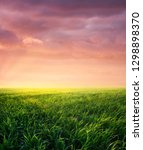 grass on the field during... | Shutterstock . vector #1298898370