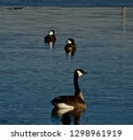 Canada Goose And Hooded...