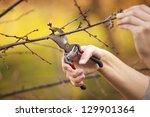Pruning An Fruit Tree   Cuttin...