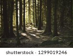 sunbeam in forest at viking...   Shutterstock . vector #1299019246