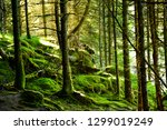 sunbeam in forest at viking...   Shutterstock . vector #1299019249