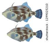 black scraper fish | Shutterstock .eps vector #1299025210
