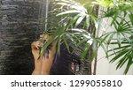 sexy young brunette woman... | Shutterstock . vector #1299055810