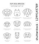 top dog breeds. hunting dogs... | Shutterstock .eps vector #1299145789