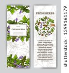 card with place for text. herbs ...   Shutterstock .eps vector #1299161179