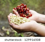 coffee   fresh coffee seed in... | Shutterstock . vector #129916508