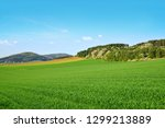 spring rural landscape with... | Shutterstock . vector #1299213889