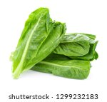 fresh cos lettuce isolated on... | Shutterstock . vector #1299232183