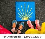 sign shells for piligrims on... | Shutterstock . vector #1299322333