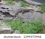 lace monitor lizard on a log in ... | Shutterstock . vector #1299372946