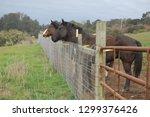 beautiful horses equine | Shutterstock . vector #1299376426