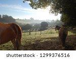 beautiful horses equine | Shutterstock . vector #1299376516
