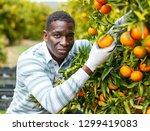 african american man gardening... | Shutterstock . vector #1299419083