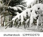 snow on the conifer tree branch.... | Shutterstock . vector #1299532573