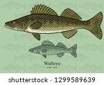 walleye  yellow pike. vector... | Shutterstock .eps vector #1299589639