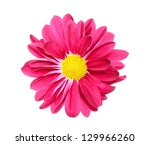 a chrysanthemum daisy isolated... | Shutterstock . vector #129966260