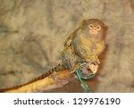 tropicarium 2 | Shutterstock . vector #129976190