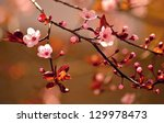 beautiful flowering japanese... | Shutterstock . vector #129978473