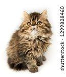 beautiful persian kitten cat... | Shutterstock . vector #1299828460